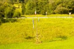Campo EG 2011